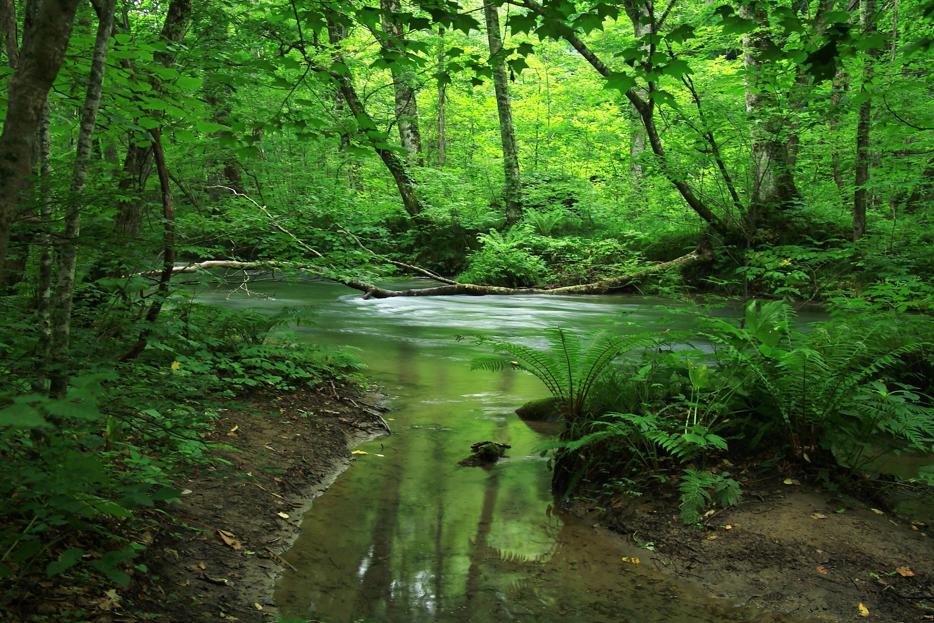 芽温の森へようこそ - 芽温の森 HOME 芽温の森について ご予約について 料金システム アク