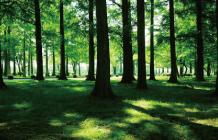 森のアロマ